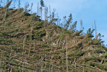 Tatras - Hurricane Damages 10