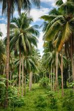 las Kokosowe drzewo