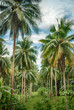 Coconut jungle