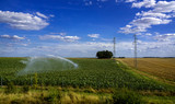 field irrigation with a crop
