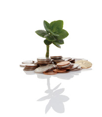 Young tree growing from pile of coins.