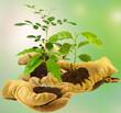 concept bourse d'échange de plantes entre jardiniers