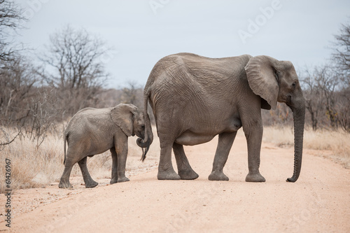 Elephants crossing road in Kruger Park, South Africa