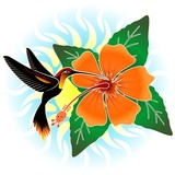 Hummingbird and Orange Hibiscus