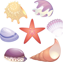 Seashells collection with starfish
