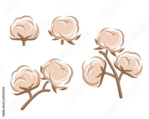 Cotton set. Vector
