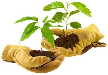concept bourse d'échange de plantes