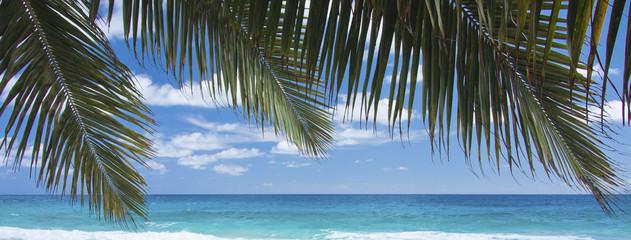 palmes de cocotiers sur fond d'océan