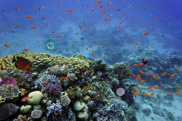 Tropical fish and Hard corals