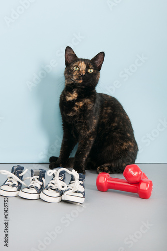 Cat with sports equipment