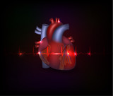 Beautiful cardiology heart design and normal cardiogram