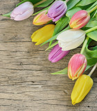 colorful tulips over rustic wooden