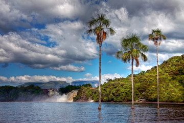 Three palm trees growing in the lake waters