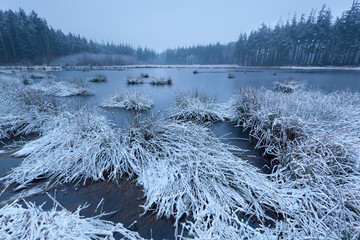 cold frosty morning on swamp in forest