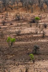 Trockenzeit im Chobe-Park  in Botswana