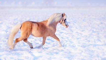Stallion on walk.