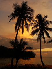 Tropical beach with palm trees at sunrise, Ang Thong National Ma