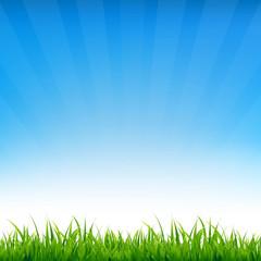 Blue Sky With Grass
