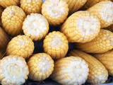 yellow corn for background