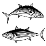 Albacore Tuna Illustrations