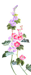 traditional Chinese painting ,peony