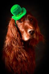 irish dog in st.patrick hat