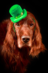 irish dog in st.patrick hat