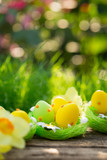 Easter eggs on green grass