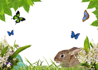 rabbit and eggs in flowers isolated on white