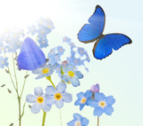 blue  forget-me-not flowers and two butterflies on sunny backgro