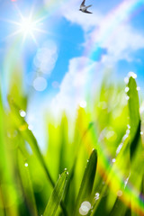 abstract art natural spring blur green background