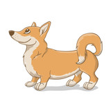 Welsh Corgi red