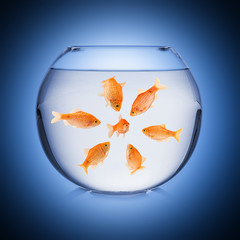 fishbowl mobbing concept