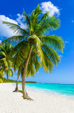 Sandy beach with palm trees, Dominican Republic in Caribbean