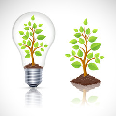 Green plant in light bulb with reflection. Vector