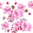 Floral vector seamless wallpaper with pink  flowers