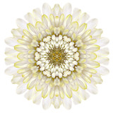 White Chrysathemum Mandala Flower Kaleidoscopic Isolated