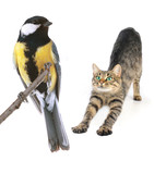 cat and titmouse
