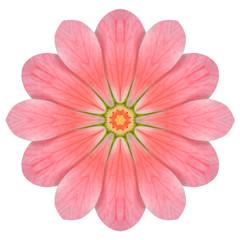 Pink Hydrangea Flower Mandala Isolated on White