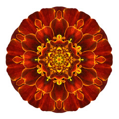 Red Concentric Marigold Mandala Flower Isolated on White