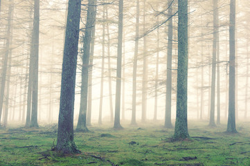 forest with fog and vintage effect