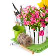 Pink roses and tulips with garden tools. Isolated on white