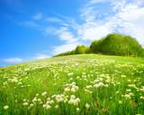 Fototapety Field of flowers