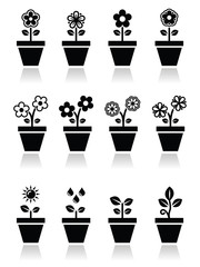 Flower, plant in pot vector icons set