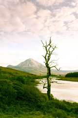 single tree in Donegal scenic view green tone