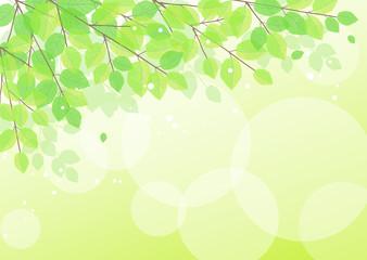 新緑の背景