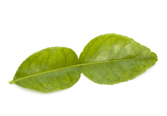 Kaffir lime leaf isolated on the white background