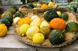Pumpkins and gourds for sale in fall.
