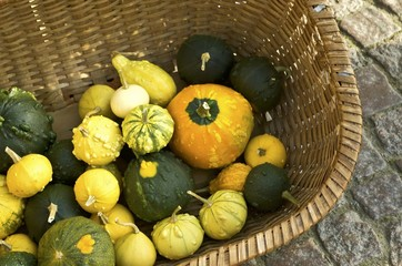 Pumpkin and gourds in weaved basket in fall.