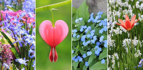 Collage - Frühlingsblumen im Garten